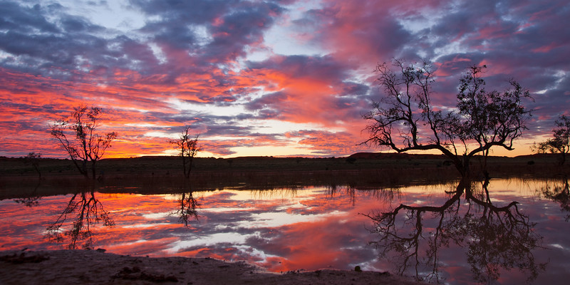 Sunrise over Coolibah Swamp
