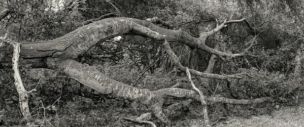 OAK FOREST #7