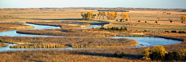 Nebraska Serengeti in Autumn