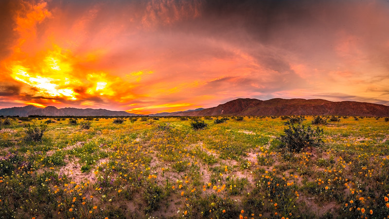 Anza Borrego Desert Spring Wildflowers Fine Art Photography 45EPIC Dr. Elliot McGucken Fine Art Landscape and Nature Photography! San Diego!