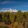 View of trees and Grand Teton in Grand Teton National Park, Jackon, Wyoming
