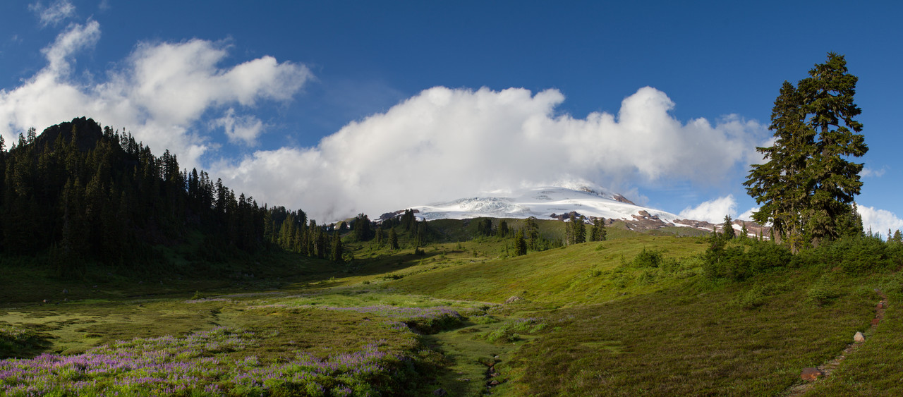 A meadow of wildflowers is seen below Mount Baker in Washington's Cascade Mountain Range.