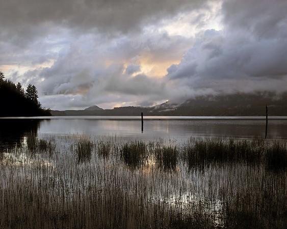Washington State Lake Quinault #1