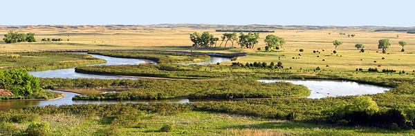 Nebraska Serengeti in Early Summer