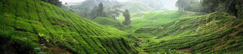 Sea of Tea