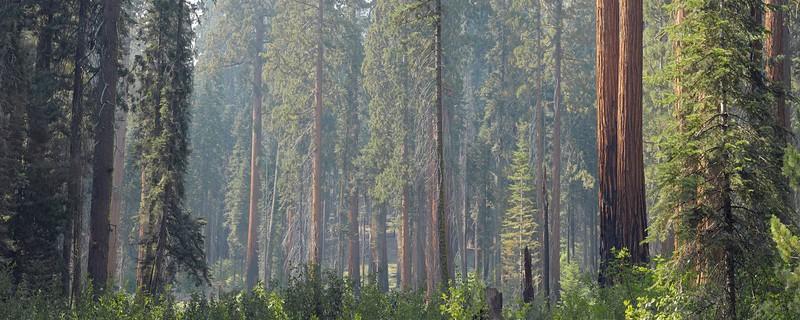 Sequoia National Park Vista #1