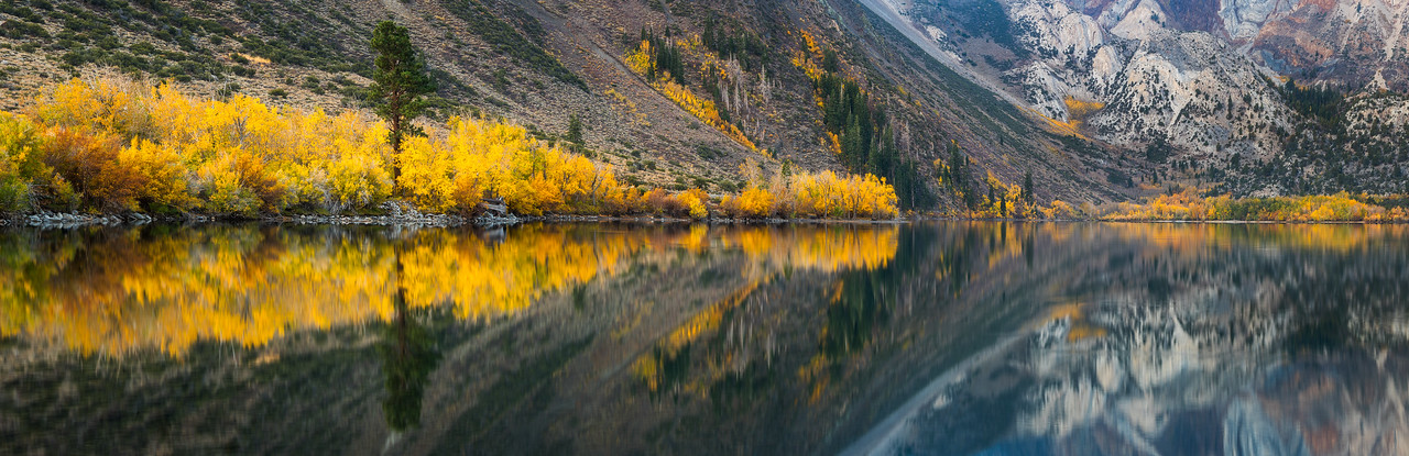 Convict Lake fall aspen panorama
