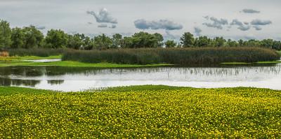 Colusa Wetland