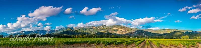 Napa Valley Panoramic Vineyards