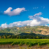 Napa Valley Panoramic Vineyards
