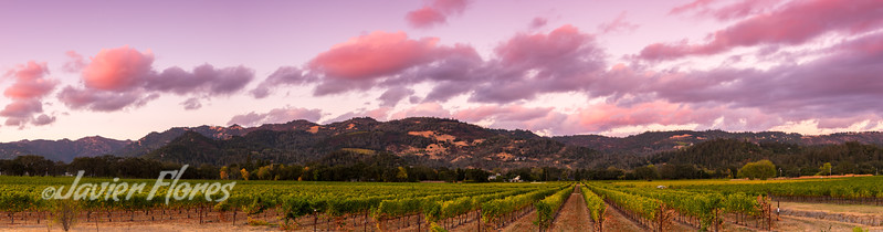 Panorama of Napa Valley at sunset
