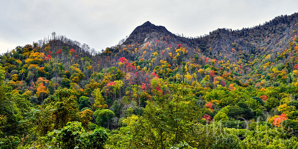 Autumn At Chimney Tops Pano