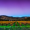 Sunset at Vineyards in Napa