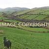 Irland Lanscape 2