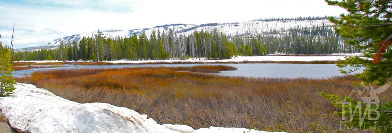 a spring awakening , Yellowstone N.P.