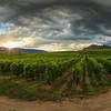 Black Sage Vines- The Bend