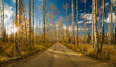 Aspen Alley in Fall