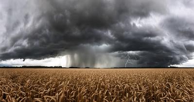 Wheat Storm