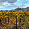 pano-edna-valley-vineyard_9017
