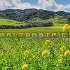 pano-slo hills_5916