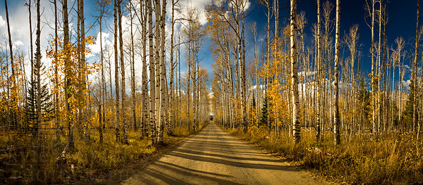 Aspen Alley in Autumn