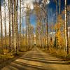 Aspen Alley in Autumn