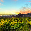 pano-edna valley vineyard-3658b