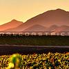 pano-edna-valley-winery-vineyard_3331
