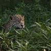 Awareness of potential prey