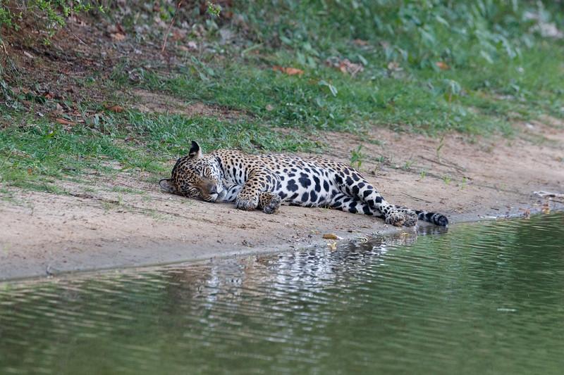 Resting by the waterhole
