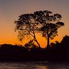 Sunset-silhouette-Weaver Bird Nest-Pantanal-Brazil
