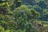 Nice trees in Chapada.