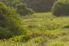 Pantanal wetlands.