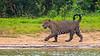 Pantanal-9798