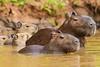 Pantanal-12539