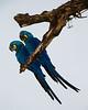 Pantanal14-3350