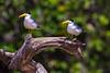 Pantanal-14594