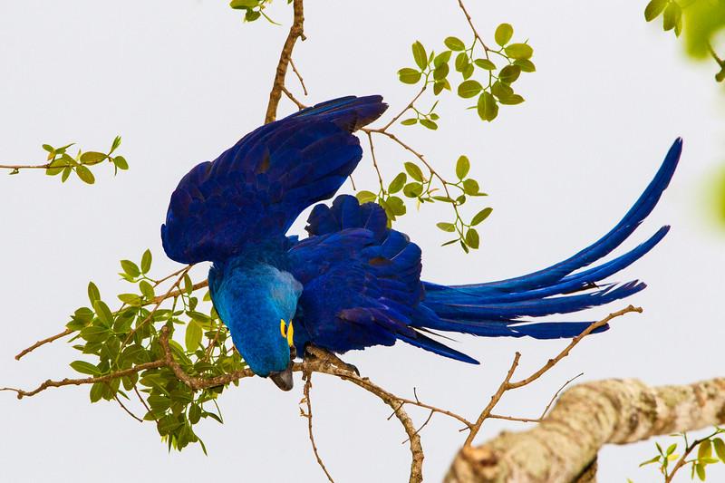 Pantanal-12000