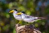 Pantanal-14634