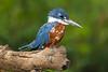 Pantanal-12933