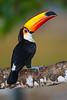 Pantanal-665
