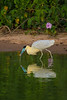 Pantanal14-1973