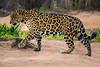Pantanal14-7567