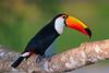 Pantanal-15560