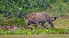 Pantanal-9874
