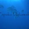Omilu<br /> (c) Kalei Nuuhiwa