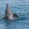 Naia.Sea Life Park<br /> (c) Kuulei Kanahele