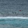 Diving<br /> (c) Kalei Nuuhiwa
