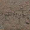 Kahuku<br /> (c) Kuulei Kanahele