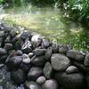 Paniwai.Waipio<br /> (c) Kuulei Kanahele